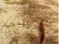 Madeiras e arames destruídos pelo ICMBIo.